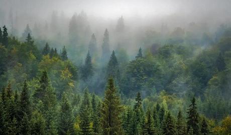 植树节|得高地板构建健康家居,呵护地球生态
